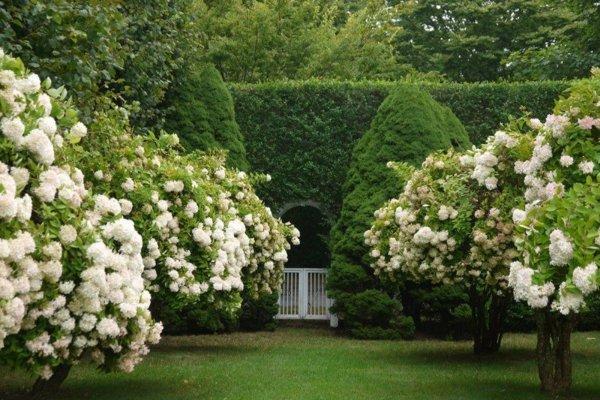 gradina ideq beli hrasti cvetq