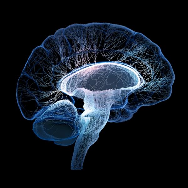hrani mozak vredni