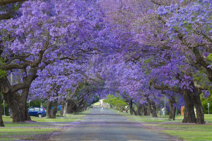 krasivi ulici po sveta avstralia