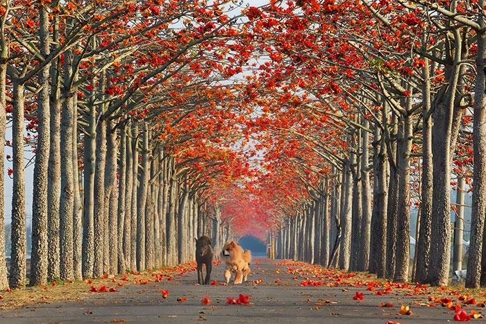 krasivi ulici po sveta taivan
