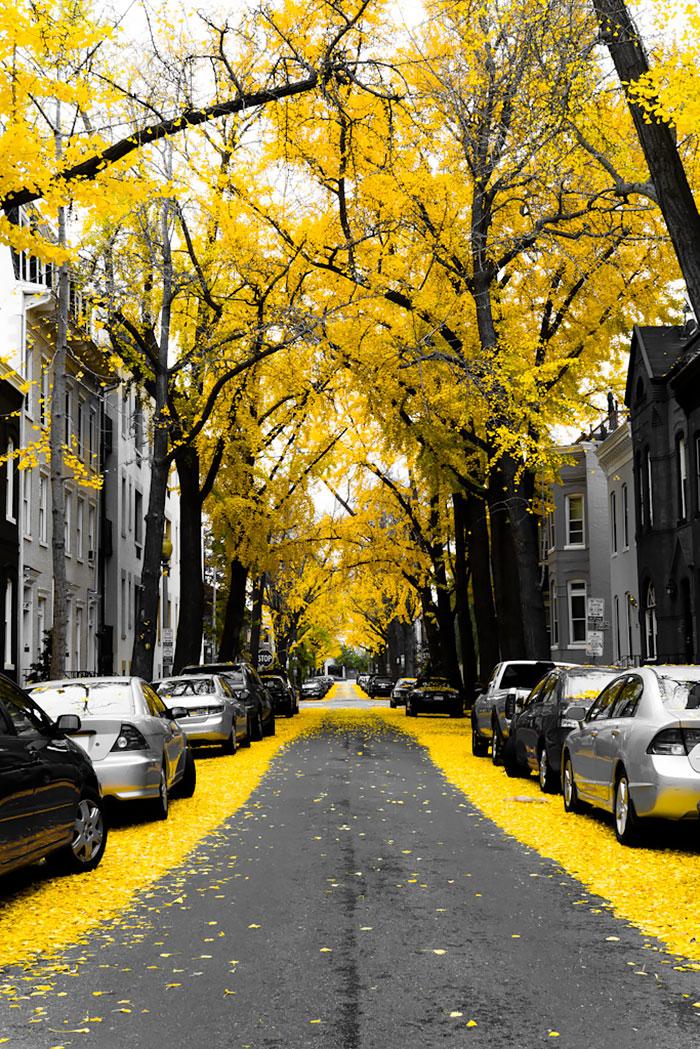 krasivi ulici po sveta vashington