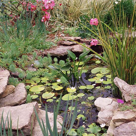 малка градина