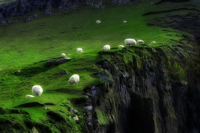 fotografiq ovce zelena polqna snimki