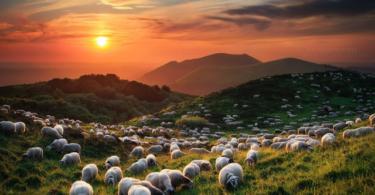 snimki ovce zalez polqna