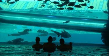 unikalni baseini po sveta akvarium