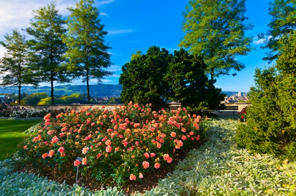 bern shveicariq rozi gradina