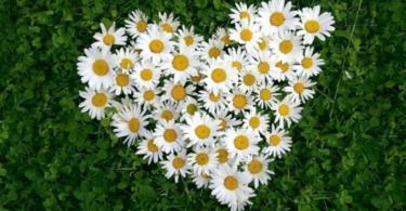 Цветя за градина като от романтична приказка