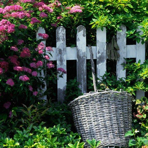 darveta hrasti gradina spirea rozova