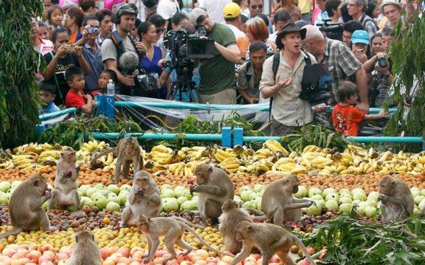 festivali po sveta maimuni plodove tailand