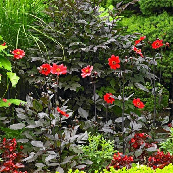 Съвети за градина цветя идеи