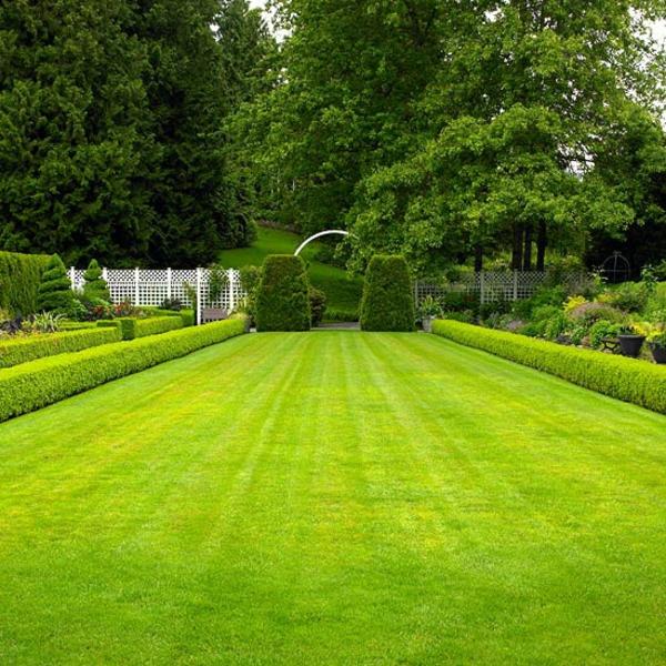 Съвети за градина райграс морава
