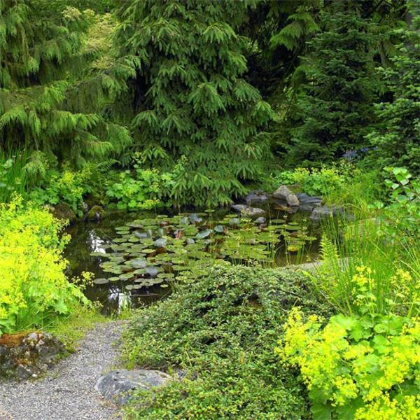 Съвети за градина езеро цветя