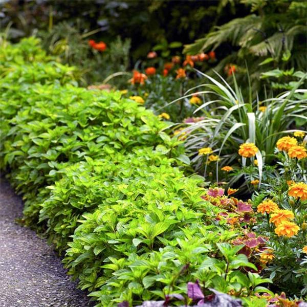 Съвети за градина цветя храсти растения