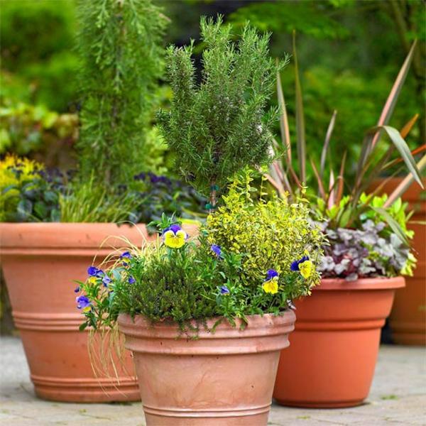 Съвети за градина саксии с билки и подправки