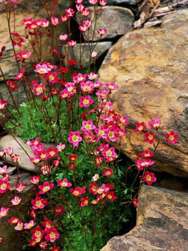 gradinski alpineum idei rozovi svetq skali