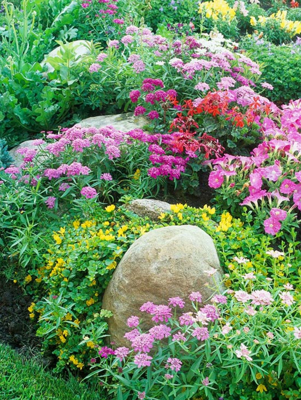 idei alpineum gradinski rozovi cvetq treva