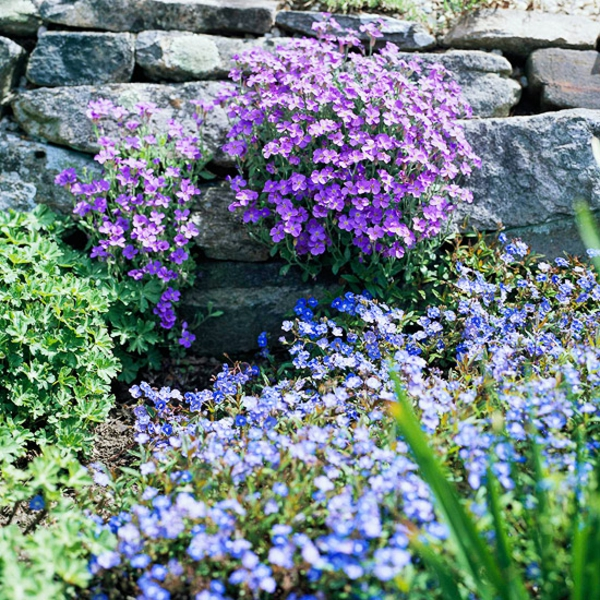 idei gradinski alpineum lilavi sini cvetq kamani