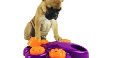 8 забавни игри за кучета