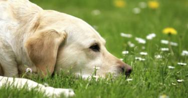 Защо кучето яде трева