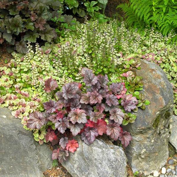 Съвети за градина растения