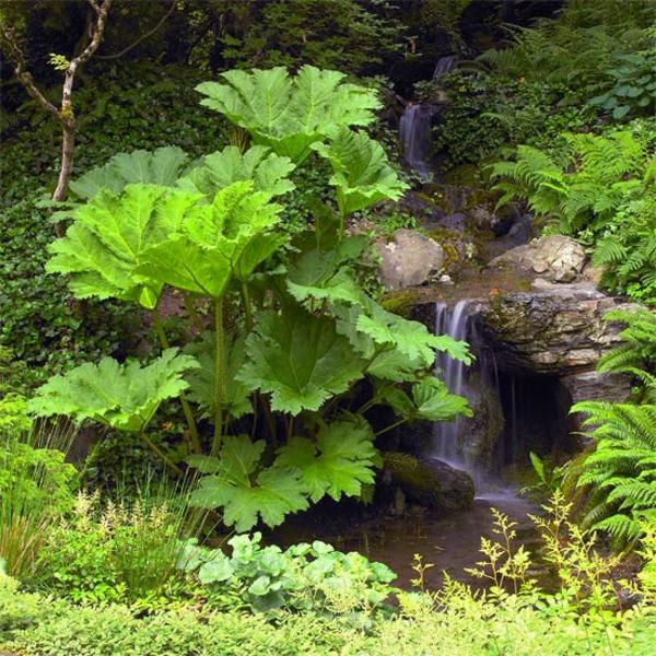 Съвети за градина водопад растения