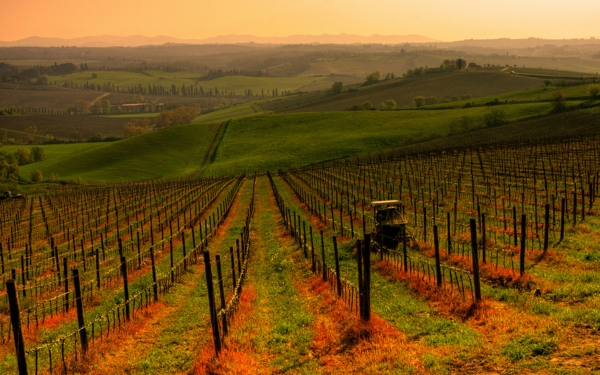 vino loze chianti toskana