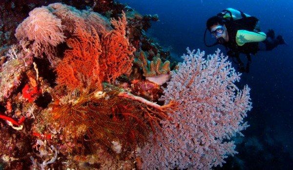 beliz sinq dupka vodolaz skali korali