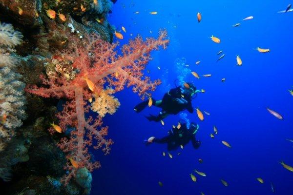 beliz amerika vodolazi okean korali ribi