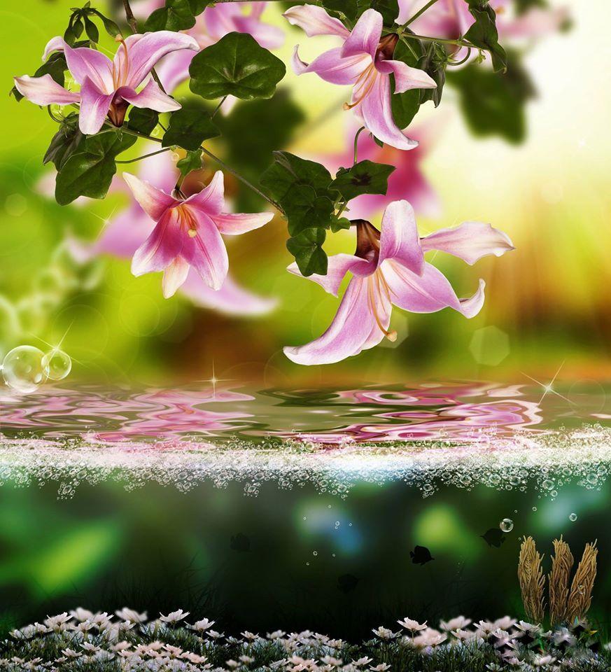cvetq voda priroda