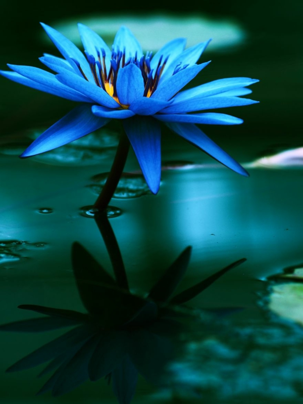 fotografiq peizajna cvete sinio