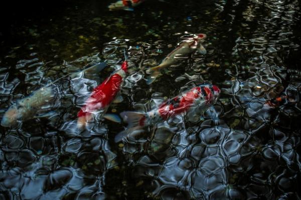 fotografiq peizajna ribi