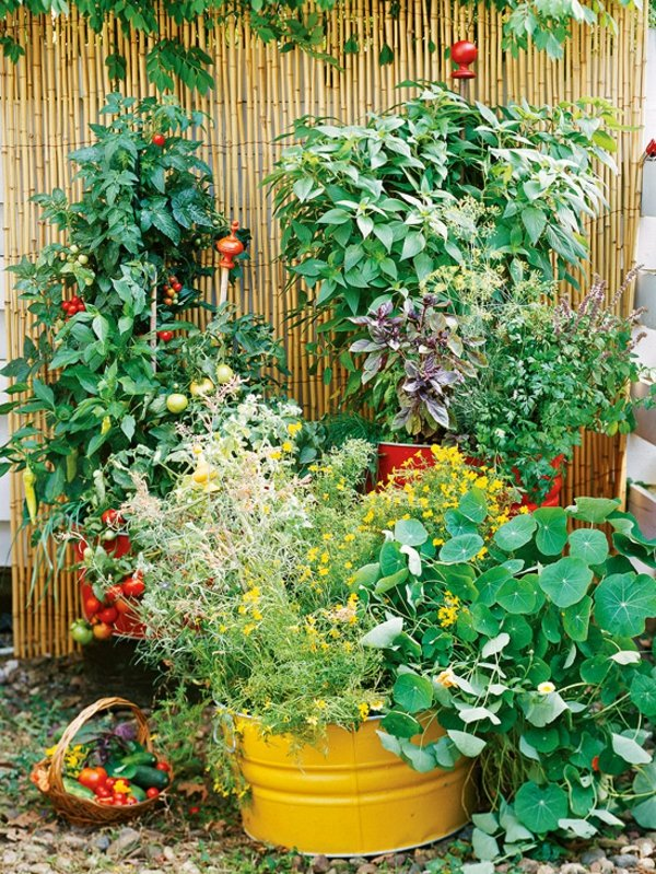 gradina zelenchukova domati rasteniq