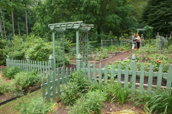 gradina zelenchukova rasteniq ograda aranjirane krastavici