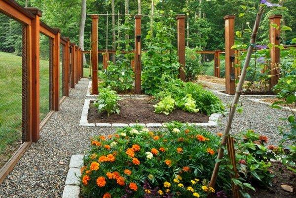 gradina zelenchukova saveti maruli domati rasteniq cvetq