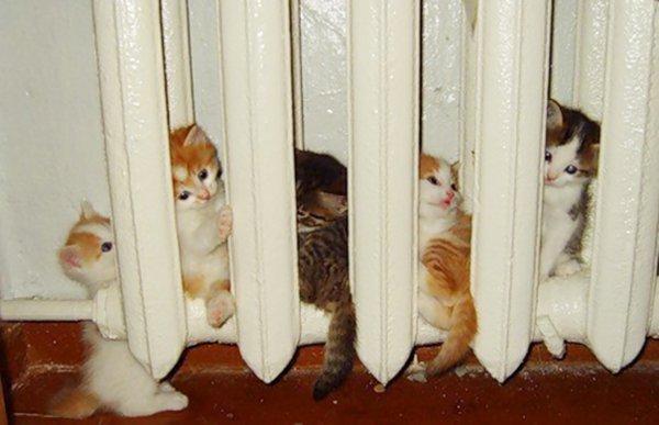 jivotni kotki parno radiator fotografiq