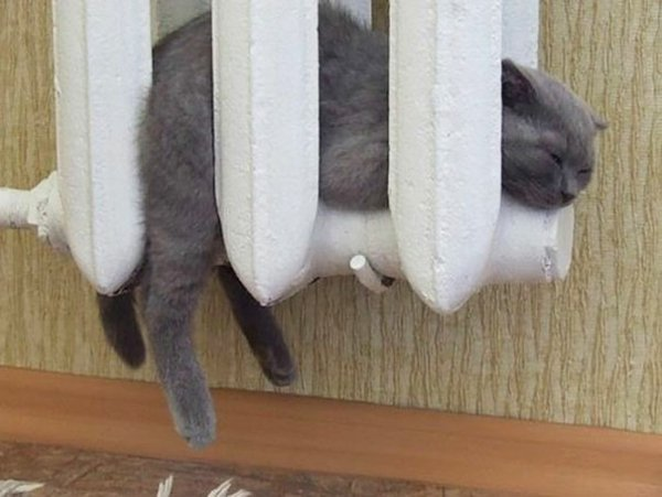 kotka fotografiq parno jivotni radiator