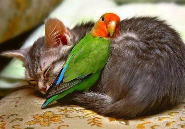 jivotni kotka papagal fotografiq