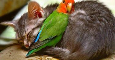 kotka-papagal-jivotni-fotografiq
