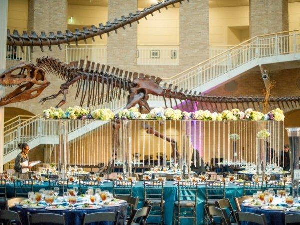 mesta za svatbi masi stolove muzei skelet jivotni