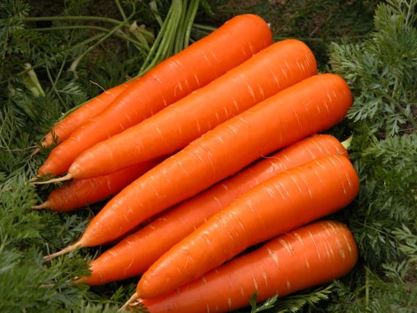 morkovi fakti zdrave