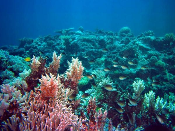 okinava ostrov qponiq korali okean