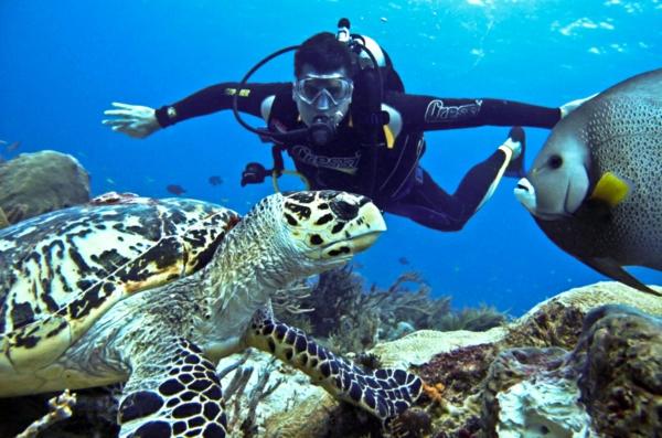 okinava qponiq ostrov korali ribi kostenurka