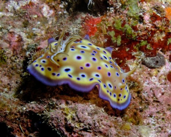 ostrov okinava koral qponiq okean