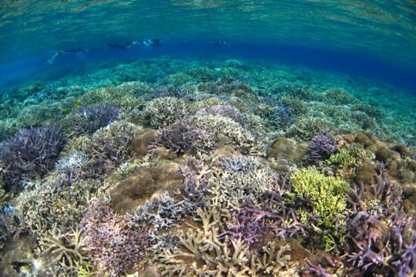 ostrov okinava koraliq qponiq okean