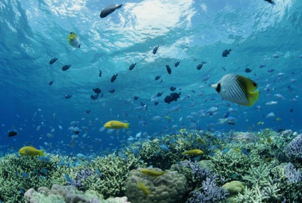 ostrov okinava qponiq korali