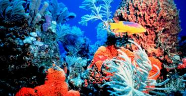 ostrov-okinava-qponiq-ribi-korali