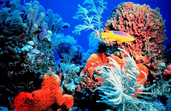 ostrov okinava qponiq ribi korali