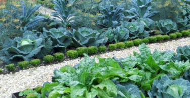 Нашата първа зеленчукова градина