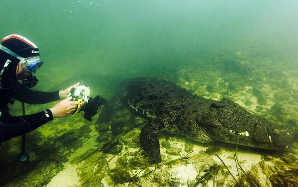 atrakcii destinacii krokodili afrika