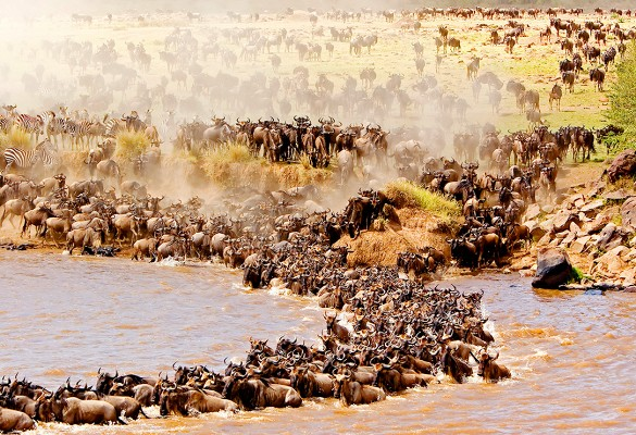 destinaciq atrakciq turizam safari migraciq